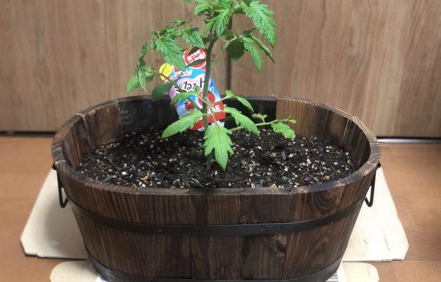 ベランダ家庭菜園始めました!