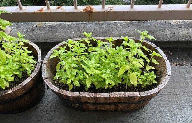 家庭菜園のその後と新カラー剤